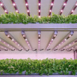 Vertical Farm Milano thumb